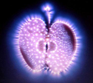 apple vitality